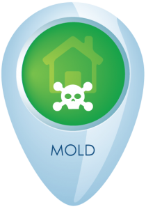 mold removal & restoration